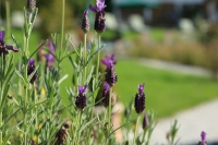 Bild-Garten (5)