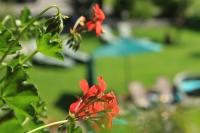 Bild-Garten (6)