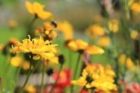 Bild-Garten (7)